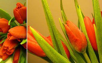 Nádherná Valentýnská kytice patnácti červených tulipánů přímo z holandské burzy + BONUS: přáníčko a doprava po Praze ZDARMA!