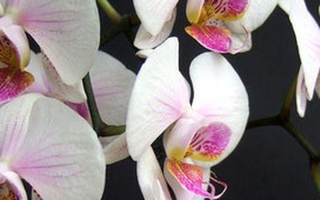 Kytice orchideí s přáníčkem, kterou Vám zavezeme kamkoliv po Praze. Využijte této bezkonkurenční nabídky a potěšte své blízké dárkem nejen k Valentýnu.