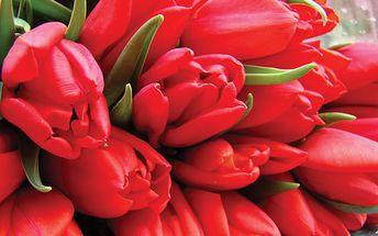Získejte kytici 19 tulipánů i se zelení za pouhých 270 Kč z původních 530 Kč, udělejte radost na MDŽ