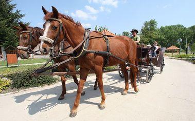 Úžasné 3 dni pre 2 osoby v spoločnosti koní na Ranči u BOBIHO. Vychutnajte si jazdu na koni aj na koči, ukážte deťom domácu ZOO. Pochutnajte si na domácich špecialitách a relaxujte vo wellness so zľavou až 50% !