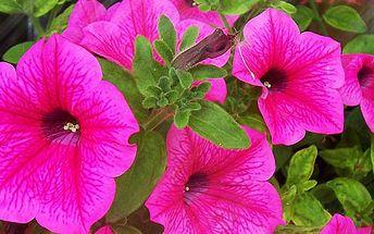 Jaro je tady a přináší krásně rozkvetlé balkóny a okna díky truhlíkům s květinami a bylinkami, které rozzáří Váš šedivý den! Vše bez námahy. Květiny a bylinky jsme pro Vás do truhlíků vysadili a stačí si je už jen přinést domů. Vyberte si ze tří variant t