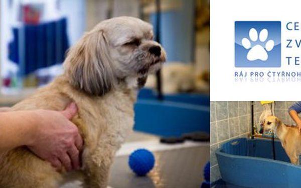 125 Kč za poukaz na služby Centra zvířecí terapie v hodnotě 250 Kč. Masáž, aroma koupel nebo trenažér pro domácího mazlíčka se slevou 50 %.