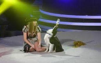 Buďte svědky jedinečné Show DOGDANCING a to za pouhých 99 Kč!! 7.5. 2011 se v hale Na Balkáně uskuteční kvalifikační závod na mistrovství světa v DOG DANCINGU! Těšte se na účastníky světového kalibru!
