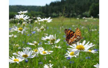 Na samotě u Lipna (13.-15.5.2011) víkend v klidu.