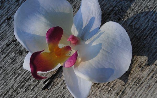 799 Kč za natur oil massage for girls - smyslná masáž s vůní orchidee