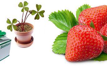 """ABSOLUTNÍ HIT SOUČASNOSTI! Sada """"Grow it – Vypěstuj si""""! Vyberte si jakoukoli rostlinku z naší nabídky za neskutečnou cenu 69Kč! Chcete si svůj domov zkrášlit nevšední rostlinkou, ale bojíte se složité a náročné pěstitelské péče? Máme pro Vás skvělé řešen"""