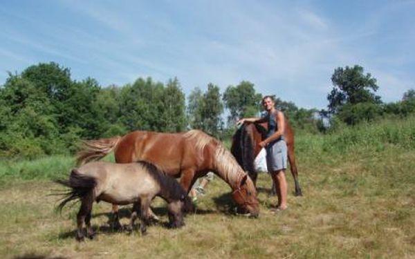 Kouzelný víkend v přírodě Máchova jezera – 3 dny a 2 noci v pětilůžkovém pokoji – polopenze + 2 obědy/2os dle výběru a láhev 1l dobrého vína :) !!! Jízda na koních, večerní vodní grilování, střelba z mongolského luku, návštěva jeskynních prostor neb