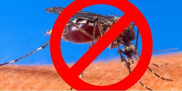 3x Ochrana před obtížným hmyzem na celé léto!