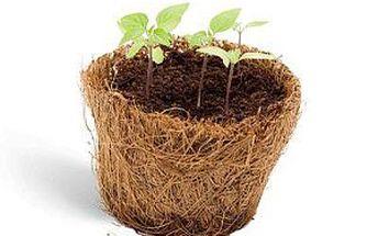 Darujte krásnou rostlinku - čtyřlístek štěstí. Jen za 99 Kč. Poprvé můžete štěstí nejen přát, ale také darovat!