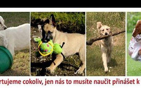 390 Kč za konzultaci výcviku Vašeho psího miláčka praktickou hrou pod vedením zkušeného instruktora, nyní se slevou 43%.