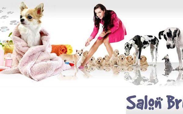 299 Kč za ZKRÁŠLUJÍCÍ PÉČI pro vašeho čtyřnohého psího miláčka – stříhání, koupání a ošetření drápků a uší. Dopřejte mu největší komfort v psích lázních Brit!