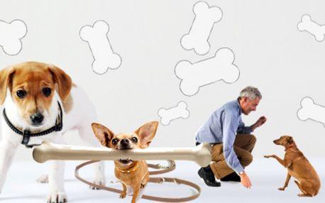 Máte pejska a neposlouchá? Nevíte jak jej vycvičit? Nabízíme výcvik psů hrou! Teoretická konzultace, ukázka v terénu a záznam na DVD pro Vás! To vše jen za 345 Kč!