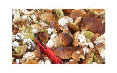 Říjnový wellness pobyt pro dva v Houbařském ráji (10. - 13.10.2011) ... superTIP