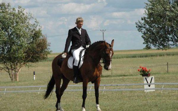 Výuka anglického ježdění za 3300 Kč. Poznejte maximální spojení člověka s koněm!!!