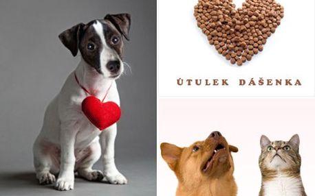 Pomozte těžkým osudům každého zvířátka z jabloneckého útulku Dášenka. Můžete pomoci jednorázovým darem, nebo se aktivně zapojit do venčení či si zvířátko přímo adoptovat.