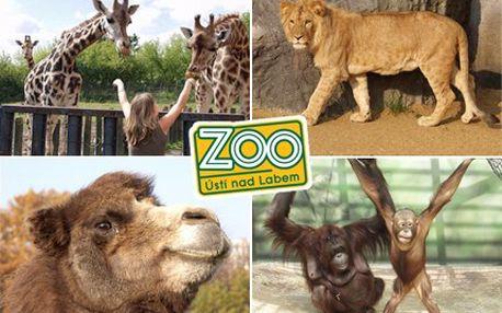 Podívejte se do ústecké zoologické zahrady a užíjte si podzimní den s polovičními náklady. 50% sleva na vstupenku do ZOO Ústí nad Labem.