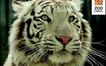 Znáte bílého tygra pouze z televizního pořadu? Změňte to a navštivte libereckou zoologickou zahradu. 80% sleva na dětskou nebo studentskou vstupenka do ZOO Liberec.