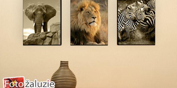 Jen 250 kč za fotoobraz vytištěný na malířské plátno. Potěšte sebe i své blízké originálním dárkem!