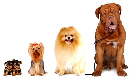Kurz stříhání psů s 70% slevou!