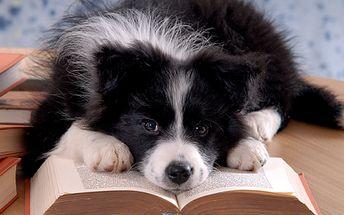 Máte kamaráda v podobě psího mazlíčka, který se mění i v chlupatého teroristu?