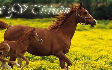 Kompletní seznámení s koněm s výukovou částí na jízdárně v délce dvou hodin! Splňte si svůj sen nebo darujte netradiční dárek!