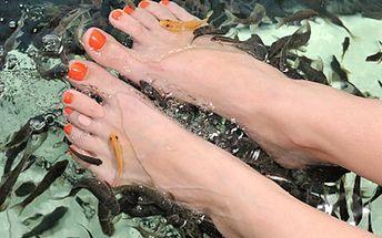 S Garra rufa rybičkami je pedikúra a manikúra přepychové hýčkání. 53% sleva na 30minutovou příjemnou pedikúru nebo manikúru pomocí rybiček Garra rufa.
