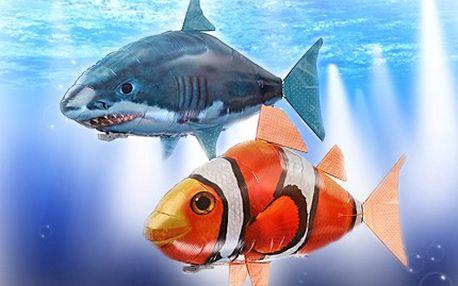 Hračka roku 2011, která nemá chybu! Kupte dětem LÉTAJÍCÍ RYBU. 50% sleva na létající rybu, HI-TECH hračku, která se volně pohybuje v prostoru díky dálkovému ovládání a héliu. Vyberte si mezi žralokem a Nemem.