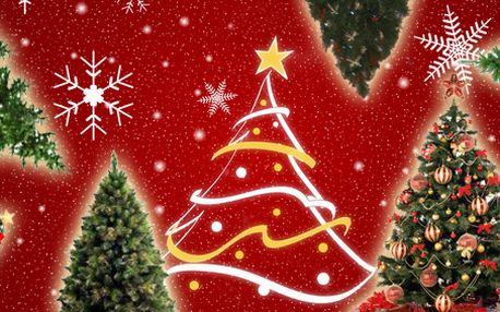 Vánoční stromky s 50% slevou všech velikostí a druhů s dovozem až do domu v Praze a Brně!!!