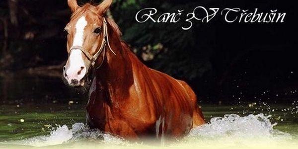 Nejkrásnější pohled na svět je z koňského sedla! Skvělý dárek k Vánocům - jezdecký kurz na profi ranči!
