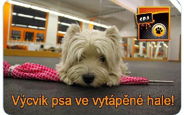 """VÝCVIK PSA ve vytápěné hale přímo na metru """"B"""". Mít vychovaného psa je prostě skvělé!"""