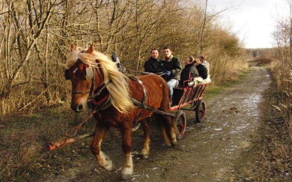 Spestrite si deň alebo víkend jazdou na konskom záprahu v okolí Čunova a vydajte sa tak na cestu časom do dávnych dôb