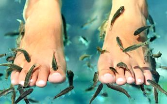 Zkuste PEDIKÚRU prováděnou RYBIČKAMI! Zažijte příjemné hýčkání. 48% sleva na pedikúru od rybiček Garra Rufa v délce 60 min, jemný peeling celých chodidel s léčebnými účinky.