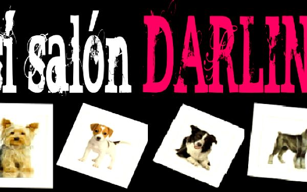 STŘÍHÁNÍ PEJSKŮ v moderním psím salonu DARLING jen za 125,-. Vaši mazlíčci Vám dělají život lepším, proč jim to tedy neoplatit? Svěřte svého pejska do rukou odborníků a dopřejte mu tu nejlepší péči!