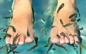 Zhýčkejte se nadstandardní péčí! RYBIČKOVÁ PEDIKÚRA stres i nohy léčí. 72% sleva na 30 minutovou bezbolestnou pedikúru pomocí rybiček Garra Rufa.