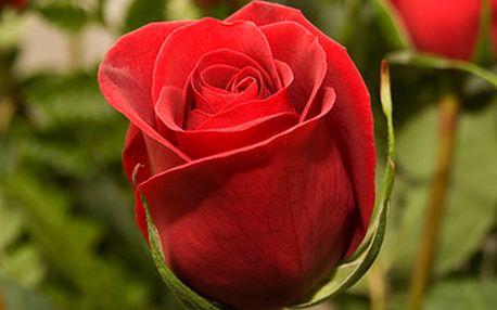 Pouhých 30 Kč za 1 růži s možností vazby kytice z růží na přání! Nezapomeňte květinami obdarovat své drahé polovičky na MDŽ (8. 3.), či 1. máje, nebo všechny maminky na Den matek (13. 5.)! Fantastická sleva 50 %!