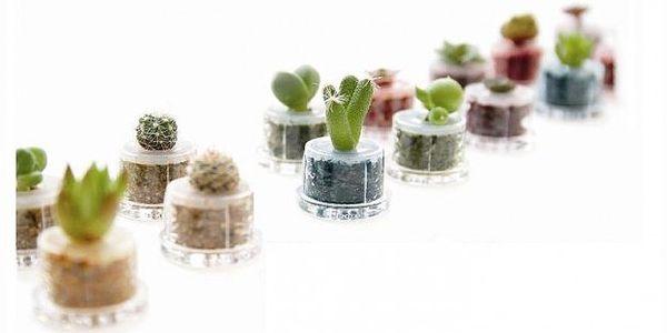 Živý mini kaktus, který můžete nosit všude s sebou! Jednoduše jej zalijte a dívejte se jak Vám roste.