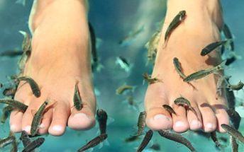 30 min ošetření rybičkami GARRA RUFA. Užijte si hýčkání. 189 Kč za manikúru nebo pedikúru od rybiček, velmi příjemný peeling kůže s léčivými účinky.