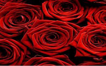 Obdarujte ženu krásnou čerstvou růží! A jaká je lepší příležitost k obdarování ženy květinou než Mezinárodní den žen?