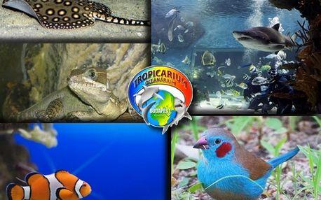 Úžasný poznávací zájazd do BUDAPEŠTI s návštevou TROPICARIA OCEANARIA! Spoznajte krásnu historickú Budapešť a najväčšie morské akvárium v Strednej Európe!