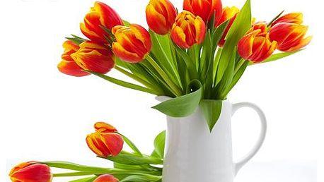 Radost z kytice z 11 tulipánů! Krásná obrovská kytice z 11 tulipánů a doplňkové zeleně udělá radost, ať je či není svátek!