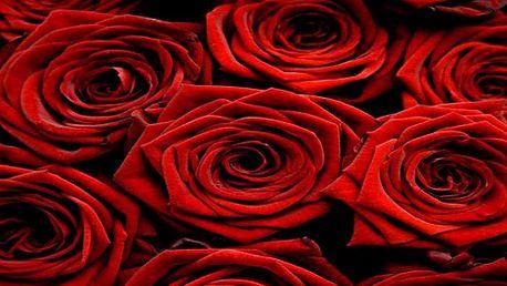 Obdarujte ženu krásnou čerstvou růží! Holandské různobarevné růže velikosti od 40 cm do 50 cm!