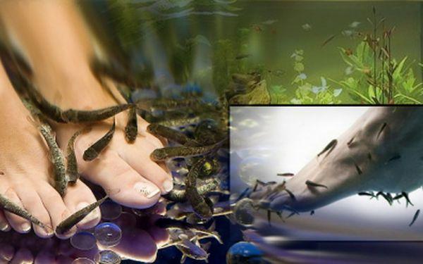 Luxusní péče o Vašy nohy za pomoci rybiček Garra rufa nyní jen za 69 Kč! Oblíbená rybí pedikúra je nevšední zážitek, který stojí za to si dopřát! Sleva 75%!