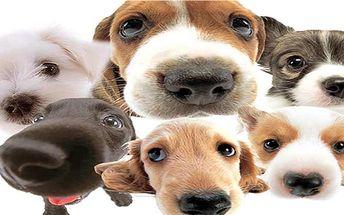 Stříhání, koupání, ošetření uší a zastřihnutí drápků! To vše pro Vaše čtyřnohé mazlíčky v psím salónu Luis!