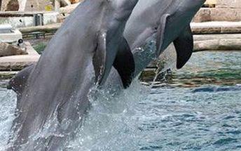 Zážitek pro celou rodinu! Jednodenní výlet do německého norimberku = návštěva zoo a delfinária