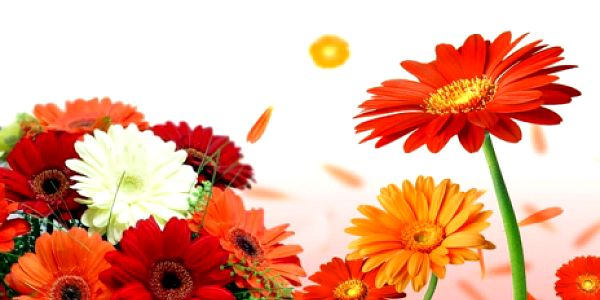 Krásných 15 barevných GERBER jen za 399 Kč! Navíc rozvoz po Praze 1, 2, 3 ZDARMA! Darujte krásné čerstvé květiny - kartička se vzkazem zdarma! Sleva 50%!