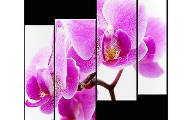 Čtyřdílný obraz na plátně 70x80 cm! Moderní design, kolekce jaro 2012, kvalita od profesionálů!