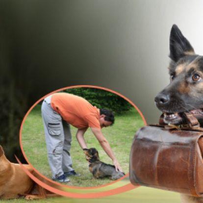 Máte pejska a neposlouchá? Nevíte jak jej vycvičit? Nabízíme výcvik psů hrou! Využijte praktické nebo teoretické hodiny za akčních 79 Kč! Ušetříte téměř 50%!