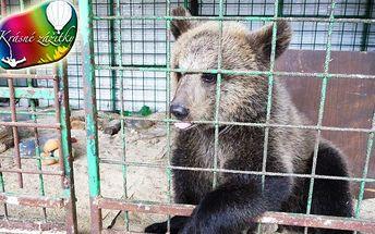 Krmení medvěda v medvědí kleci a hrátky s medvídětem, to je zážitek na celý život pro Vás i Vaše děti. Medvěda si můžete pohladit, vyfotit se s ním a pořádně si užít adrenalinu v jeho kleci. Navíc si můžete pohrát s malým medvídkem.