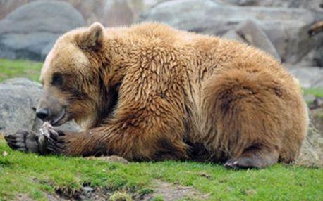 KRMENÍ MEDVĚDA a další mimořádné zážitky Zažijte mimořádný pocit při krmení dospělého medvěda, hlazení medvíděte či focení se lvem či tygrem. Adrenalinový zážitek doprovázený zkušeným ošetřovatelem.