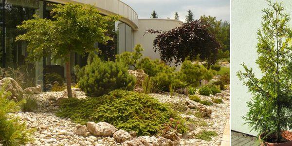 5 kvalitních, hustých a pravidelně rostlých keřů Thuja occidentalis, 120-140 cm. Působivá ozdoba vaší zahrady a skvělé řešení živého plotu.
